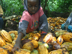 Child labor still issue on ivory coast cocoa farms let s for African crops and slave cuisine